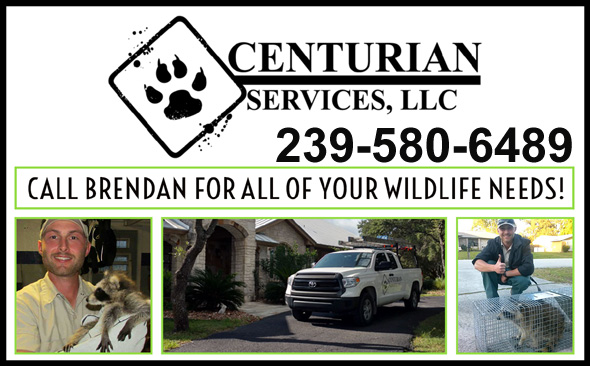 Lee County Wildlife Control Critter Trappers Florida Fl