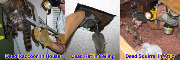 How Much Does Dead Animal Removal Cost