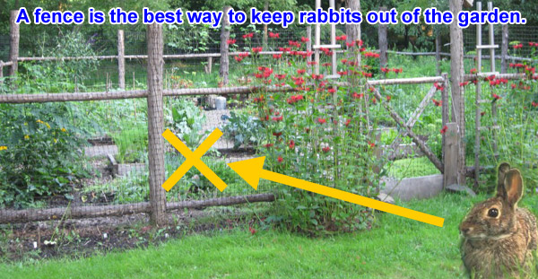 How To Get Rid Of Rabbits