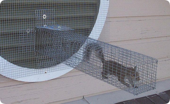 One Way Door To Remove Squirrels