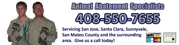 Santa Clara County Wildlife Control Wildlife Trapping Pros